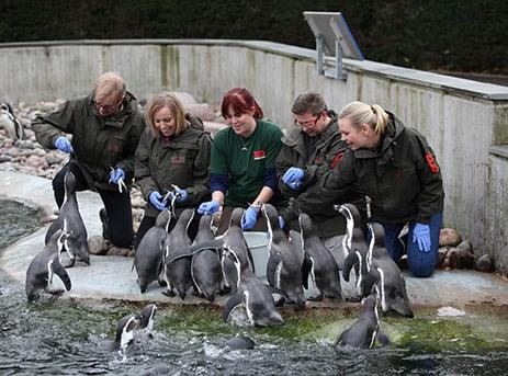 Gavekort til Zoo Zoologisk Have