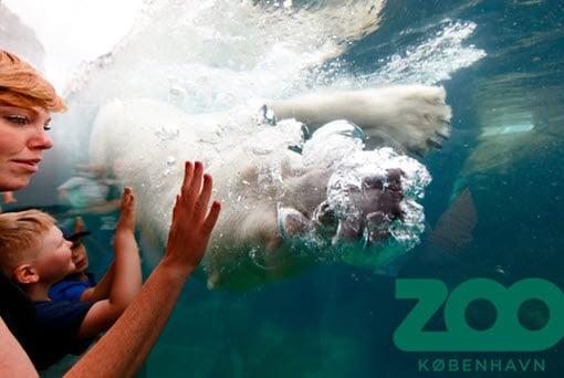 årskort zoo zoologisk have københavn