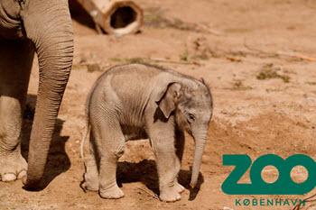 zoo årskort fordele